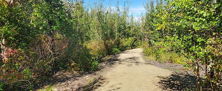View of green trees, shrubs and natural trail at Coal Mine Park in Saint Albert, Alberta