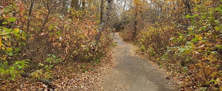 Autumn leaves on trail in Oakmont Ravine in Saint Albert, Alberta