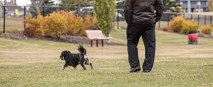 Person walking their dog in Dodge Dog Park
