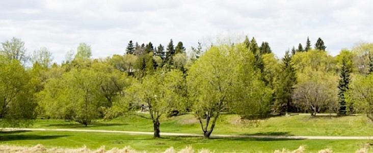 Trees along Sturgeon River