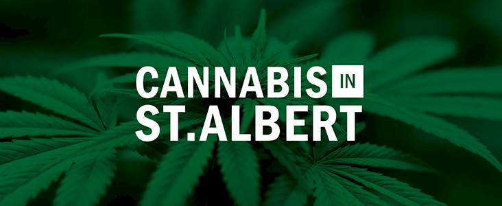 St. Albert Cannabis logo type with cannabis plants in the background