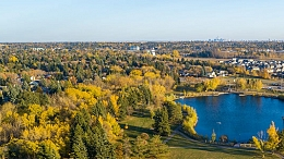 Aerial view of tree canopy in St. Albert