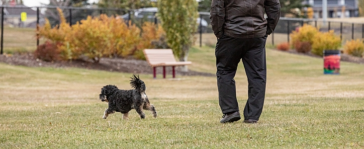 Dog and owner walking in off-leash park