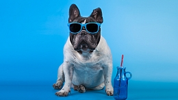 Dog sitting with blue sun glasses and water jug
