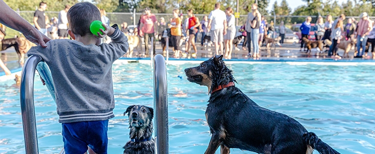 Child throws a ball for dogs at Grosvenor Outdoor Pool
