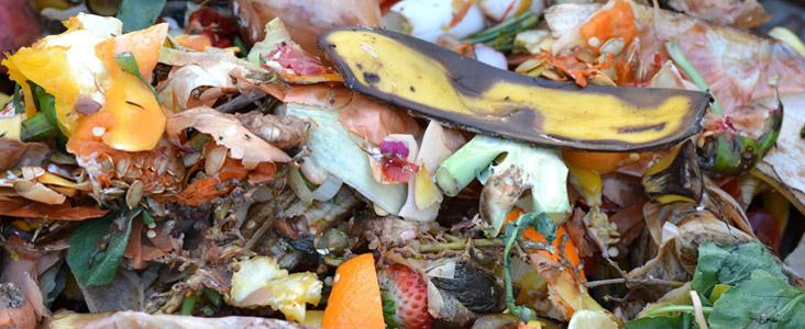 Pile of kitchen scraps
