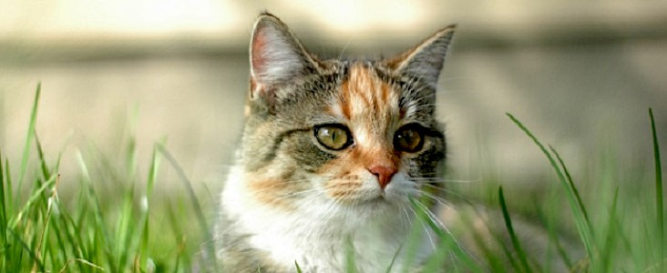 Photo of cat laying in the grass