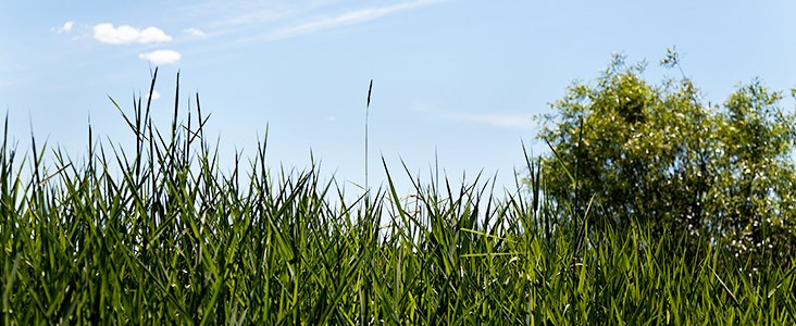 Photo of grass with a blue sky in the background