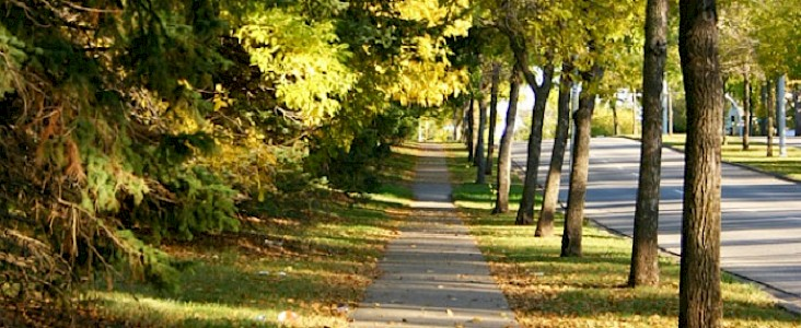 Photo of a tree lined street