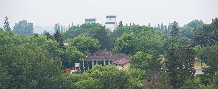 Photo of the urban tree canopy showing trees covers houses