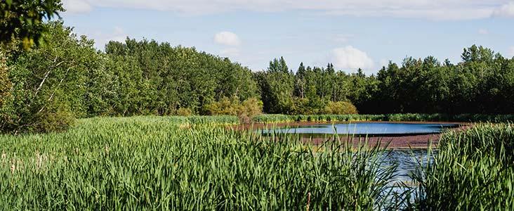 Grandin Pond