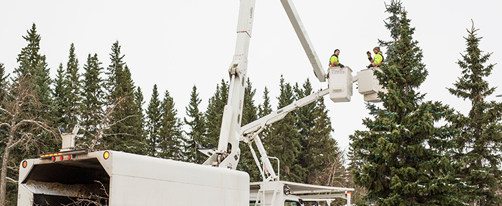 Two employees in cherry pickers performing maintenance on a tree
