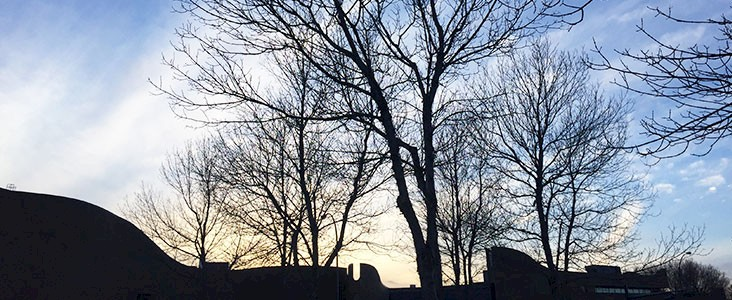 Photo of trees by St. Albert Place with no leaves