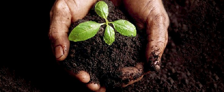 Photo of hands holding dirt with a bud with four leaves