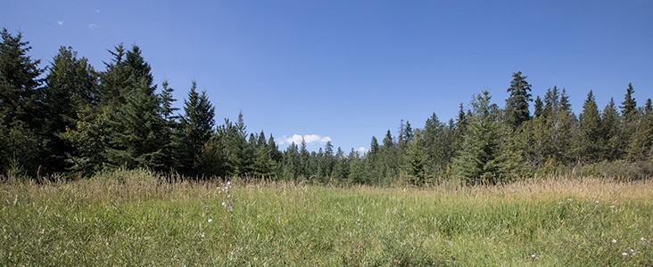Grey Nuns White Spruce Park Trees