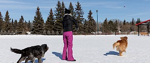 Dogs playing catch at Lacombe Lake Park